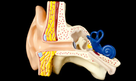 Tympanoplasty/Mastoidectomy